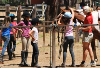 Learning to halter and bridle a horse.