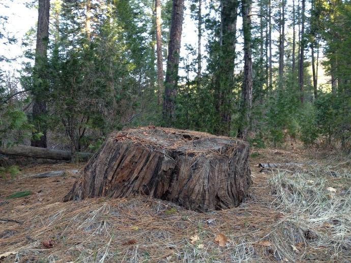 Vespers tree