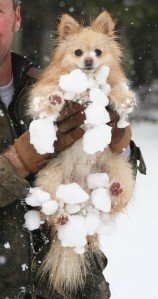 Craig holding Rosco who is covered with snowballs.