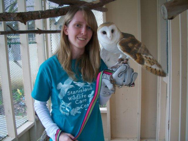 Curley the Barn Owl