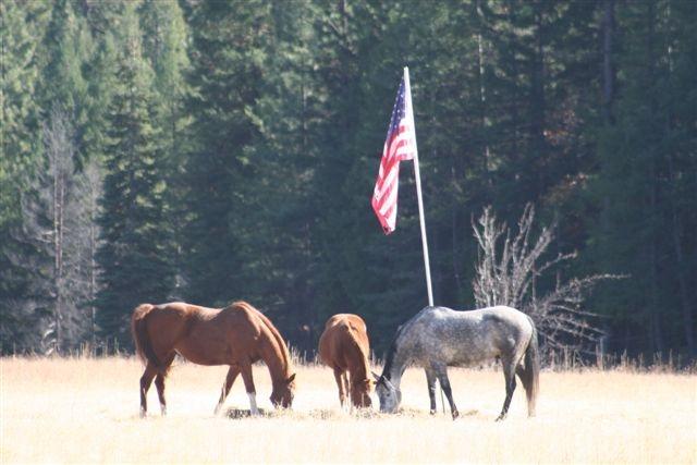 Horses & flag 1